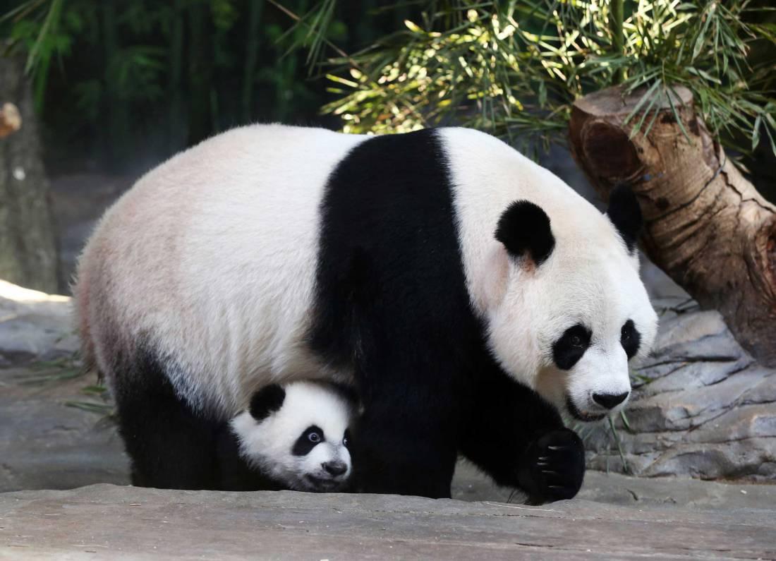 Panda Chinese Food Bear De