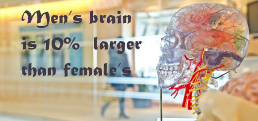 brain facts