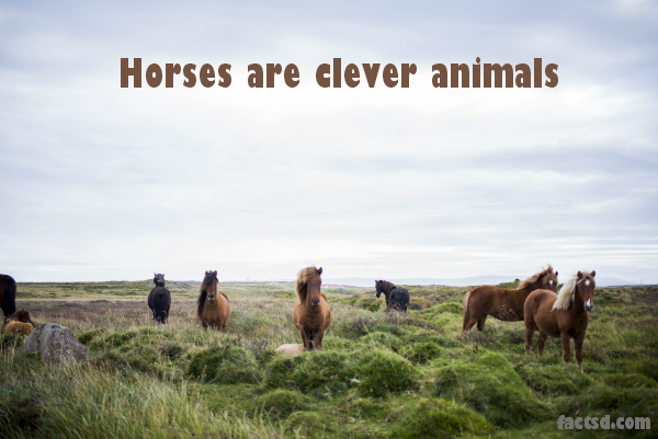 Horse Facts - Interesting Facts About Horses