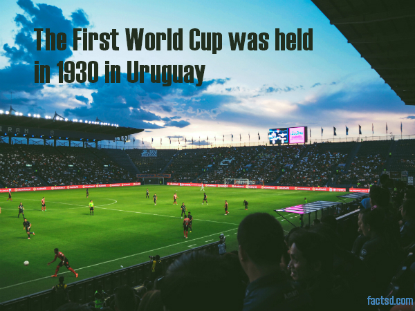 Interesting soccer facts