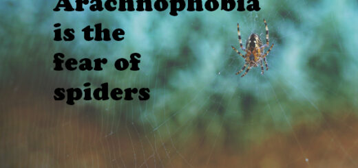 phobia facts
