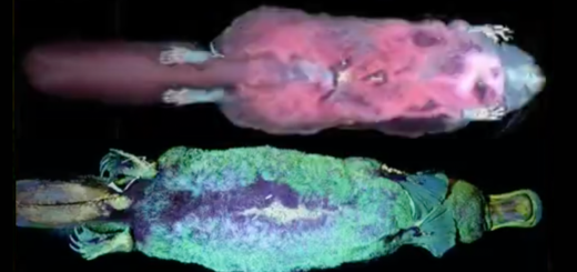 Mammals That Glow Under a Blacklight